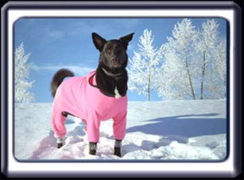 Black dog in a pink snowsuit