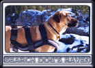 Ebbey the Canine Actor at Elbow Falls in Alberta's Kananaskis Country