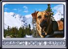 Ebbey the Canine Actor in Parker Ridge, Jasper National Park